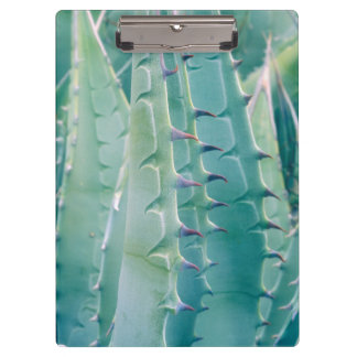 Patterns of an Agave plant Clipboard