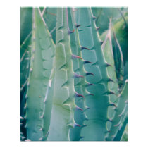 Patterns of an Agave plant Poster