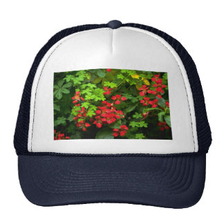 Patterns of nature hats