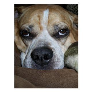 Patton Pending - Bored Dog Postcard