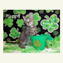 Patton's St. Patrick's Day Postcard
