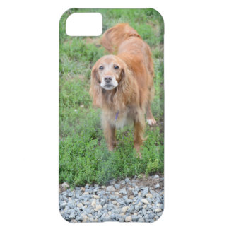 Patty Case For iPhone 5C