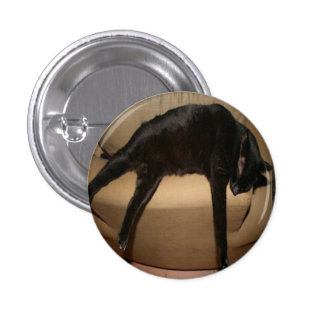 Patty The Black Cat relaxing at home Pinback Button