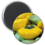 Pattypan Squash Magnet