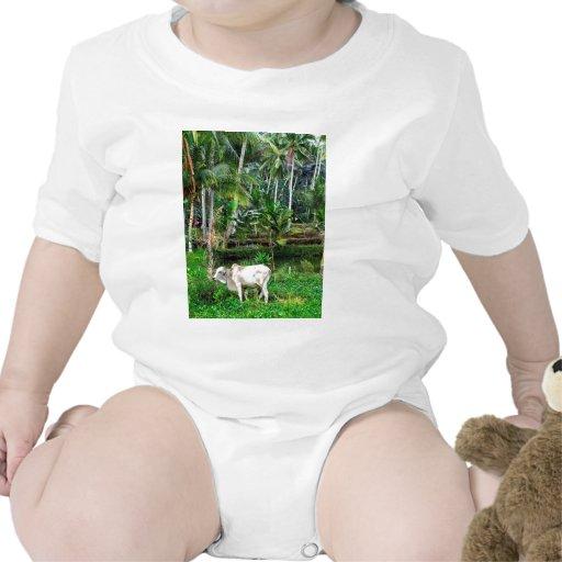 Pature rico trajes de bebé