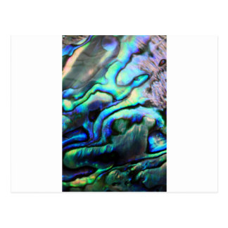 Paua abalone detail post cards