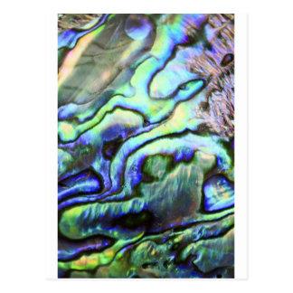 Paua azulverde de la cáscara del olmo tarjetas postales