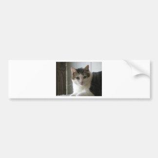 Paul Bumper Sticker