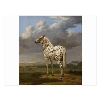 "Paulus Potter - The ""Piebald"" Horse. Vintage Image Postcard"