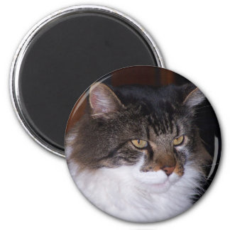 pauly 2 inch round magnet