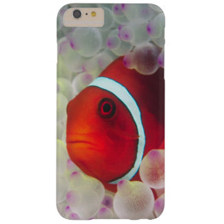 Paupau New Guinea, Great Barrier Reef, Barely There iPhone 6 Plus Case