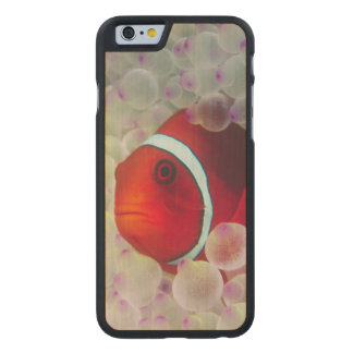 Paupau New Guinea, Great Barrier Reef, Carved® Maple iPhone 6 Case