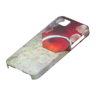 Paupau New Guinea, Great Barrier Reef, iPhone 5 Cases