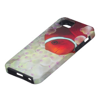 Paupau New Guinea, Great Barrier Reef, Case For iPhone 5/5S