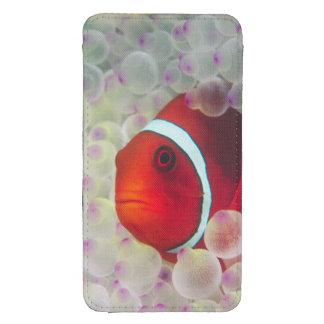 Paupau New Guinea Great Barrier Reef