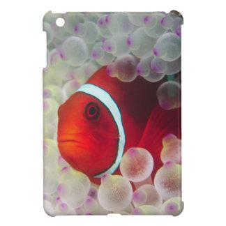 Paupau New Guinea, Great Barrier Reef, Cover For The iPad Mini