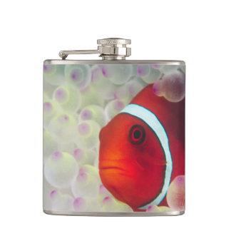 Paupau New Guinea Great Barrier Reef Hip Flasks