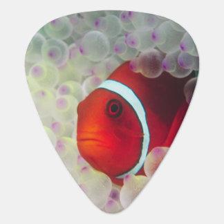 Paupau New Guinea Great Barrier Reef Pick