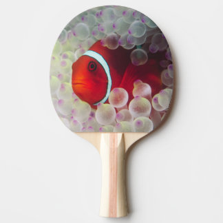 Paupau New Guinea Great Barrier Reef Ping-Pong Paddle