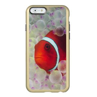 Paupau New Guinea, Great Barrier Reef, Incipio Feather® Shine iPhone 6 Case