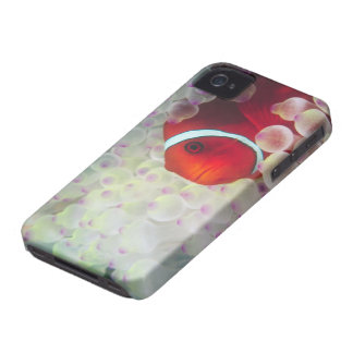 Paupau New Guinea, Great Barrier Reef, iPhone 4 Cover
