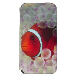 Paupau New Guinea, Great Barrier Reef, iPhone 6/6s Wallet Case