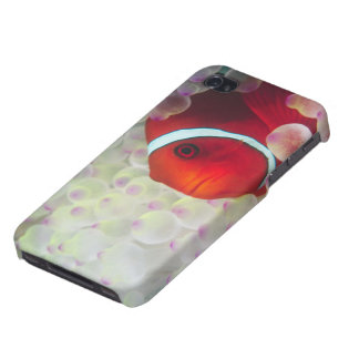 Paupau New Guinea, Great Barrier Reef, iPhone 4 Covers