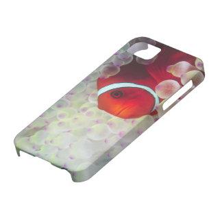 Paupau New Guinea, Great Barrier Reef, iPhone SE/5/5s Case