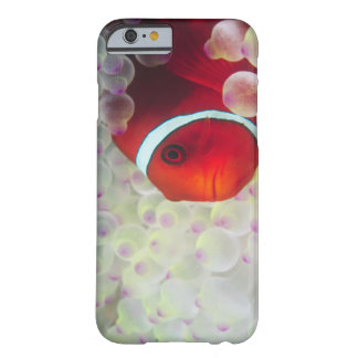 Paupau New Guinea, Great Barrier Reef, iPhone 6 Case