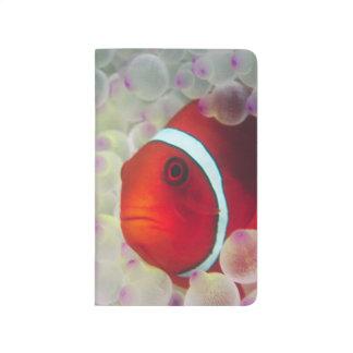 Paupau New Guinea Great Barrier Reef Journal