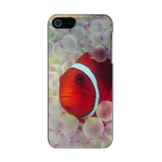 Paupau New Guinea, Great Barrier Reef, Metallic Phone Case For iPhone SE/5/5s