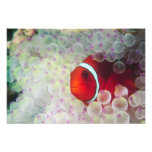 Paupau New Guinea, Great Barrier Reef, Photo Print