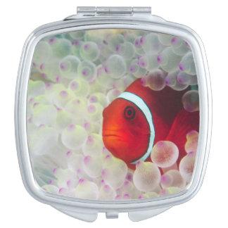 Paupau New Guinea Great Barrier Reef Compact Mirrors