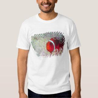 Paupau New Guinea, Great Barrier Reef, Shirt