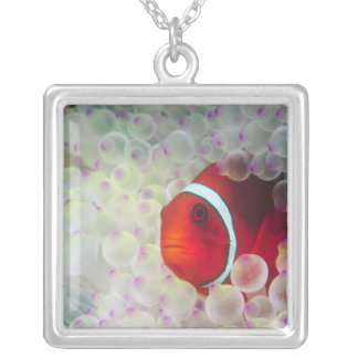 Paupau New Guinea, Great Barrier Reef, Silver Plated Necklace