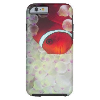 Paupau New Guinea, Great Barrier Reef, Tough iPhone 6 Case