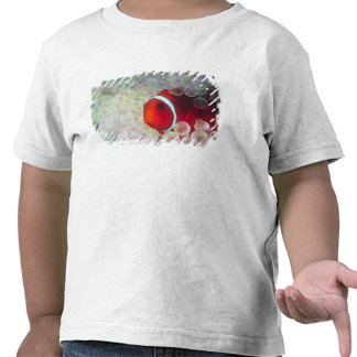 Paupau New Guinea Great Barrier Reef T-shirts