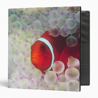 Paupau New Guinea, Great Barrier Reef, Vinyl Binder