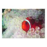 Paupau Nueva Guinea, la gran barrera de coral, Fotografías