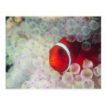 Paupau Nueva Guinea, la gran barrera de coral, Tarjeta Postal