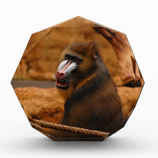 Pavian/Baboon Acrylic Award