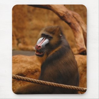 Pavian/Baboon