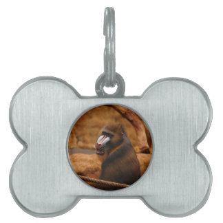 Pavian/Baboon Pet Tag