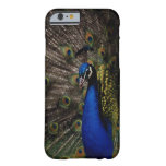 Pavo real 2 funda de iPhone 6 barely there