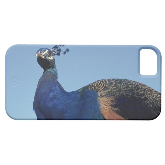 Pavo real 2 funda para iPhone SE/5/5s