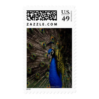 Pavo real 2 timbres postales