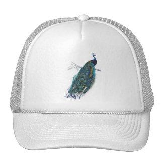 Pavo real azul con las plumas de cola hermosas gorras de camionero