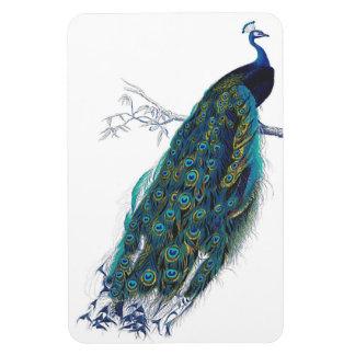 Pavo real azul con las plumas de cola hermosas imán flexible