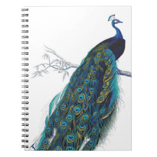 Pavo real azul con las plumas de cola hermosas cuaderno