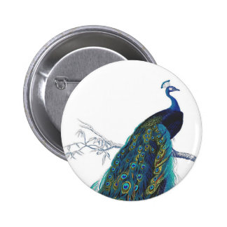 Pavo real azul con las plumas de cola hermosas pin redondo de 2 pulgadas